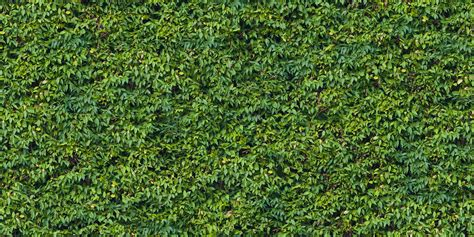 pattern photoshop vegetation hedge seamless texture pack vegetation hedge 25 png