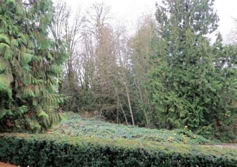 a brief rundown of trees vegetables fruit shade gardening caramel parsley
