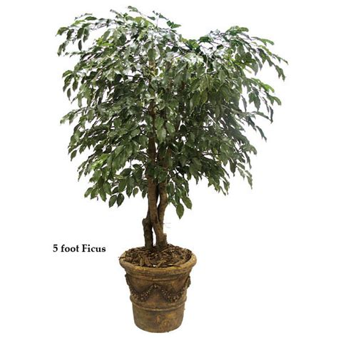 Outdoor Artificial Tree - 5 foot outdoor artificial ficus tree with trunks