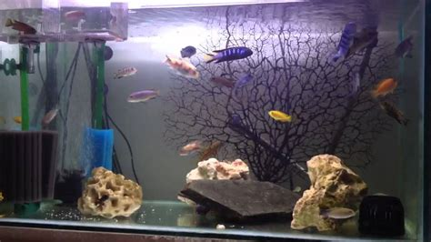 types of aquariums a few things to know about the different types of aquarium