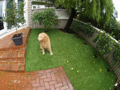 dog in backyard artificial turf for a dog run area installed in a backyard