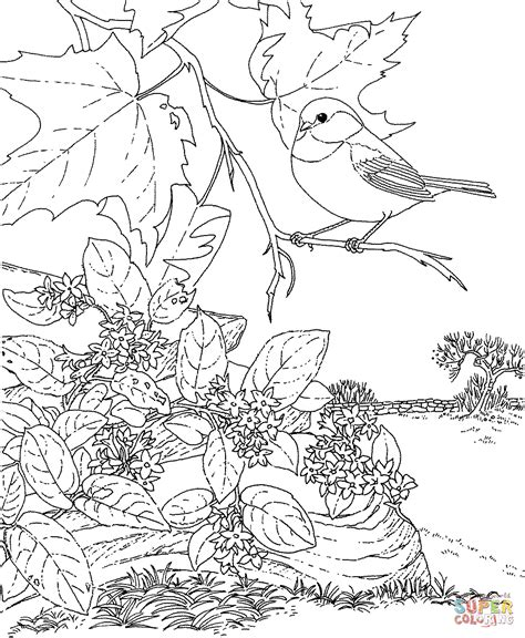 coloring pages of birds in trees black capped chickadee and mayflower massachusetts bird