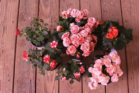norah interior design decoration corporation knit jones les fleurs
