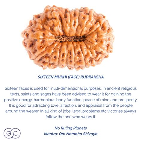 rudraksha meaning 16 mukhi rudraksha meaning and ruling planet gemme