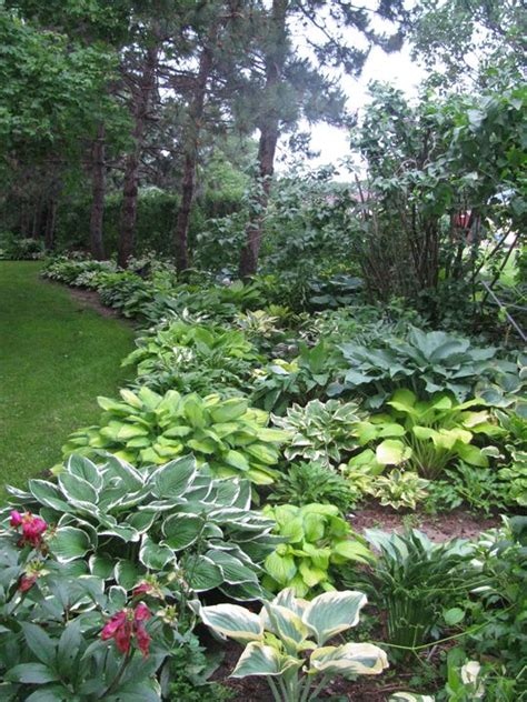 Landscape Ideas With Hostas 25 Best Ideas About Hosta Gardens On Hosta