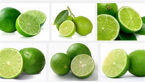 Obat Maag Tradisional Jeruk Nipis 18 manfaat jeruk nipis bagi kesehatan dan kecantikan