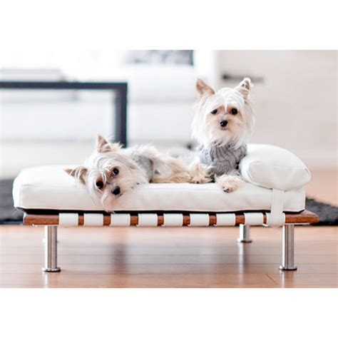 small dog beds elegant ivy modern small dog day bed designer dog beds