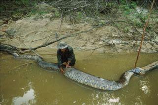 the biggest anaconda in the world