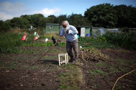 to tend gardeners tend their plots during national allotment week