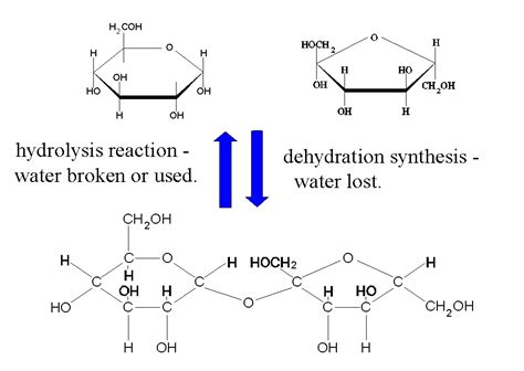 carbohydrates 5 exles hydrolysis diagram 28 images intermediate 2 bitesize