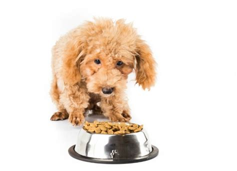 pancreatic enzymes for dogs lack of digestive enzymes in dogs petmd