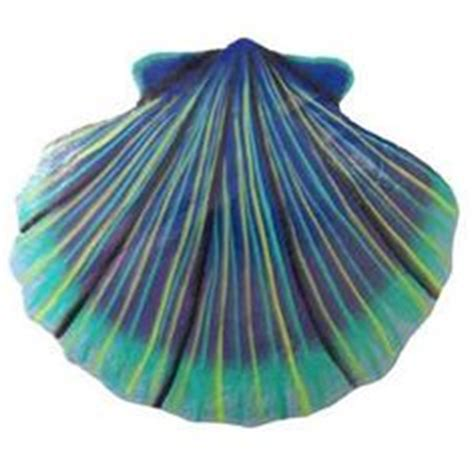 seashell color 1000 images about cottage on