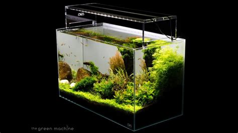 Green Machine Aquascape by Aquascape Tutorial Guide By Findley The Green