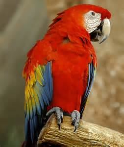 macaw colors what gives feathers their color zozeen