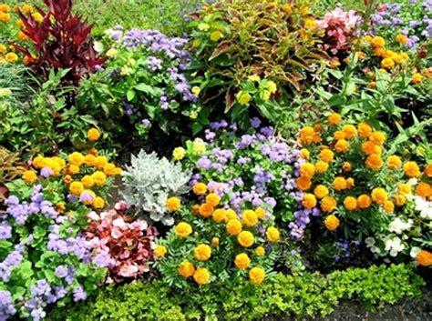piante da fiore estive tutto per il giardino natura e arte in mostra a