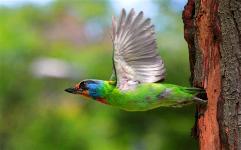 colorful birds flying   fun