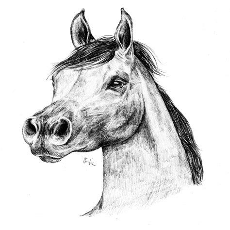 immagini di immagini di cavalli da colorare