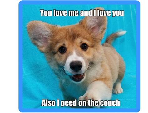 dog peed on couch funny corgi dog pee on couch refrigerator tool box