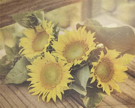 sunflowers country chic wall art   rustic home