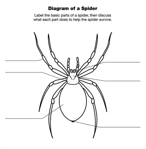 free spider diagram maker spider diagram template 12 free documents in