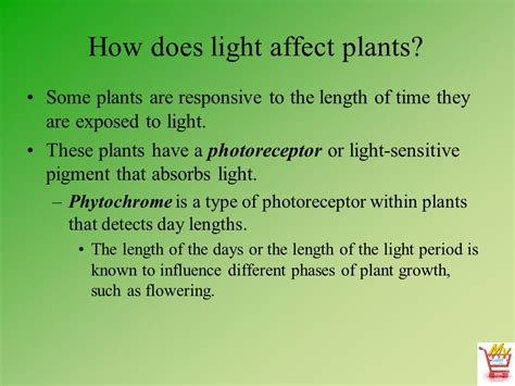 does the color of light affect plant growth horticulture science lesson 12 understanding light