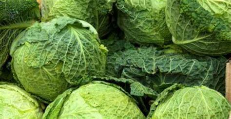 alimenti ricchi di scorie reni 10 alimenti anti scorie per depurarli