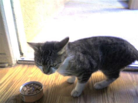 Universal Kitten k6kes universal radio customer cats socks