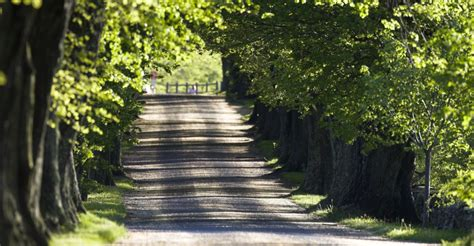 tree farms ri tree lined road on farm rhode island pictures rhode