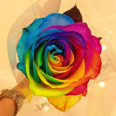 rainbow rose tattoo best 20 single tattoos ideas on