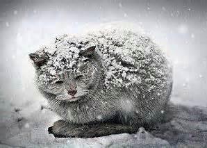 chat aussi peut mourir de froid respectez les animaux