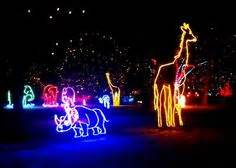 Bronx Zoo Zoos And Holiday Lights On Pinterest Bronx Zoo Light Show