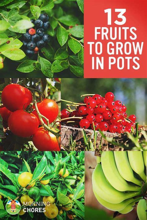fruits  berries   easily grow