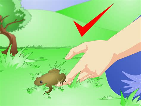 i found a frog in my backyard 100 i found a frog in my backyard extinction amphibian rescue and conservation project how to find toads with pictures wikihow how to care