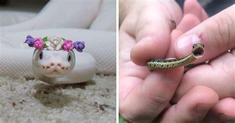 adorable snake pics     conquer  fear
