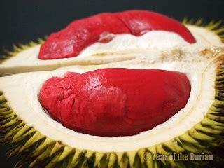 alamcyber  durian isi merah menjadi tumpuan ramai