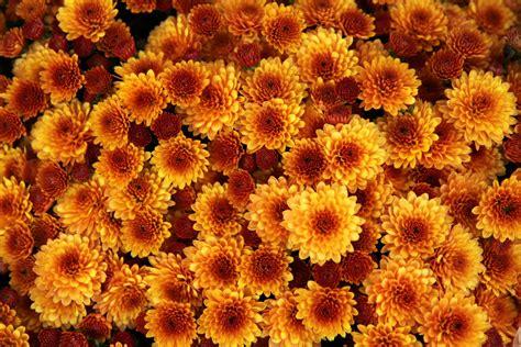 fall gardening fall gardening checklist espoma