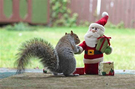 christmas time    squirrel greeting santa  recieve  gifts cute