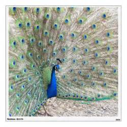 Peacock Wall Stickers peacock wall decals amp wall stickers zazzle