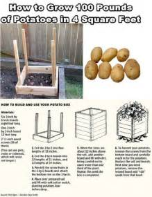 how to grow 100 pounds of potatoes in 4 sq home