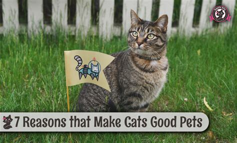 8 Reasons Cats Make Great Companions by 7 Reasons That Make Cats Pets Sweetie 2018