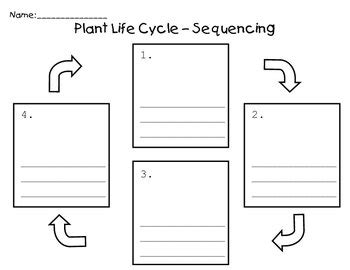 Plant Cycle Worksheet by Plant Cycle Sequence By Teachers Pay Teachers