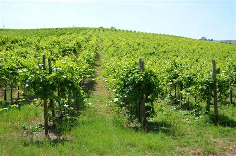 vini pavia azienda vitivinicola vigano pavia oltrep 242