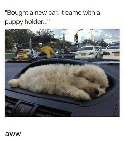 New Car Meme - bought a new car it came with a puppy holder aww aww