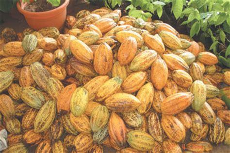 40,000 farmers get n1m cocoa seedlings from fg vanguard news