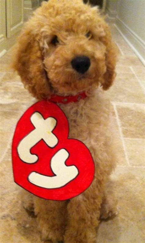 25 pet halloween costumes that are so cute we cant even 25 best images about labradoodles on pinterest puppys a