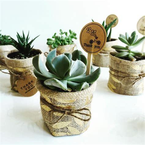 wedding gift ideas brisbane 23 best favours bomboniere succulents and more