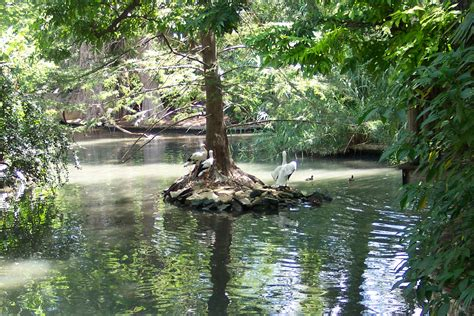 amazon amazon ah mazon in love and in awe with the amazon rainforest