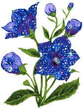 imagenes de flores azules brillantes flores azules brillantes imagenes para facebook de flores