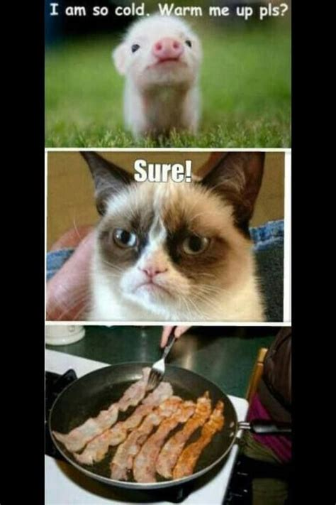 Best Grumpy Cat Meme - my favorite grumpy cat memes