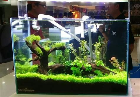 desain lu hias unik ubah akuarium seperti pemandangan bawah laut datangkan